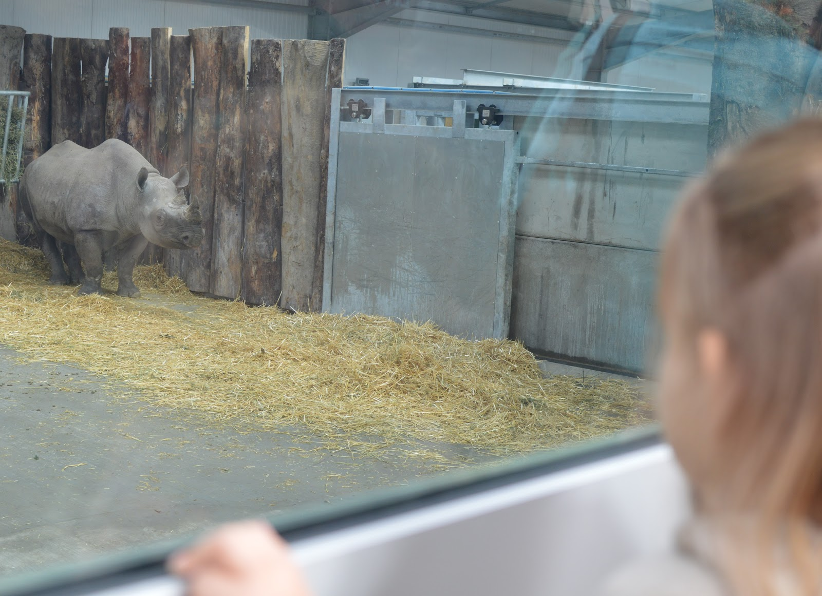 , Folly Farm Welcomes the First Black Rhinos to Wales