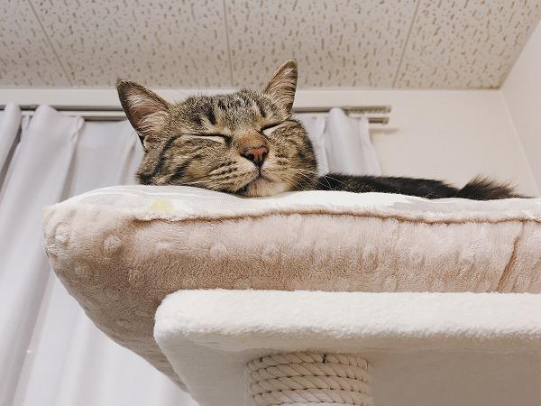 ベッドのふちにほっぺたを乗せて眠っているキジトラ猫