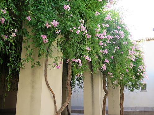 Plantas para macetas grandes floracin de los geranios for Arbustos para macetas exterior