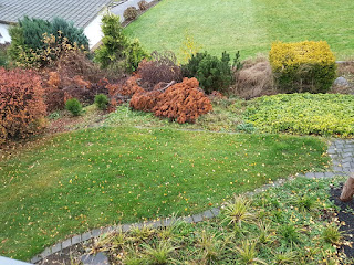 Blick in den Garten mit Sträuchern und Bäumen im Westerwald