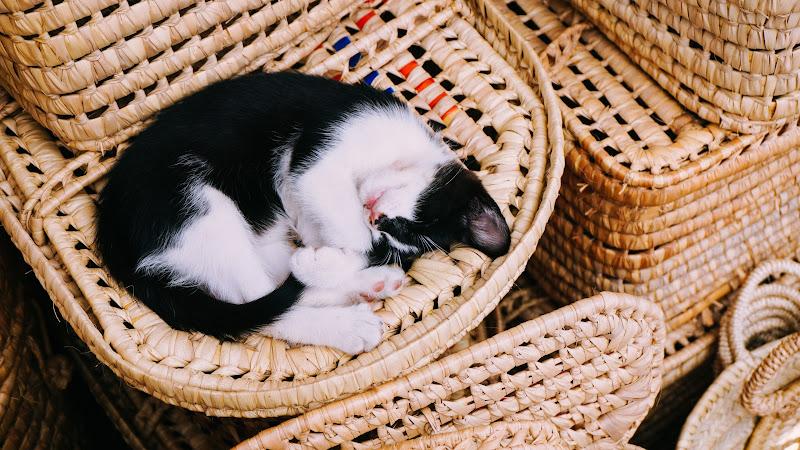 Lovely Kitty Cat