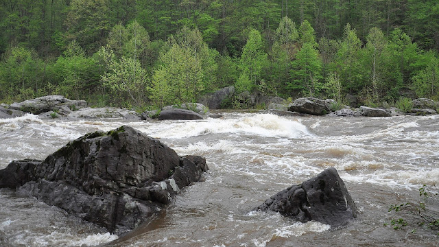 A muddied, rain-swollen section of river rapids flows around large boulders. Trees just coming into leaf can be seen on the opposite bank.