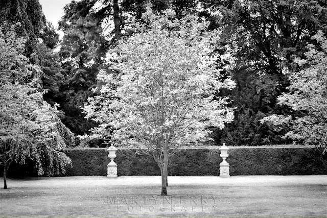 Anglesey Abbey tree in black and white by Martyn Ferry Photography