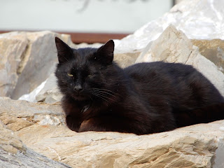Marina Di Pisaの猫