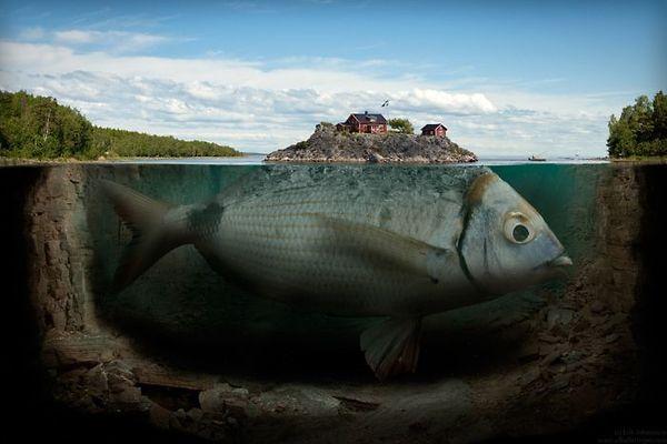 Ikan Paus yang Menelan Nabi Yunus Masih Hidup Hingga Sekarang?