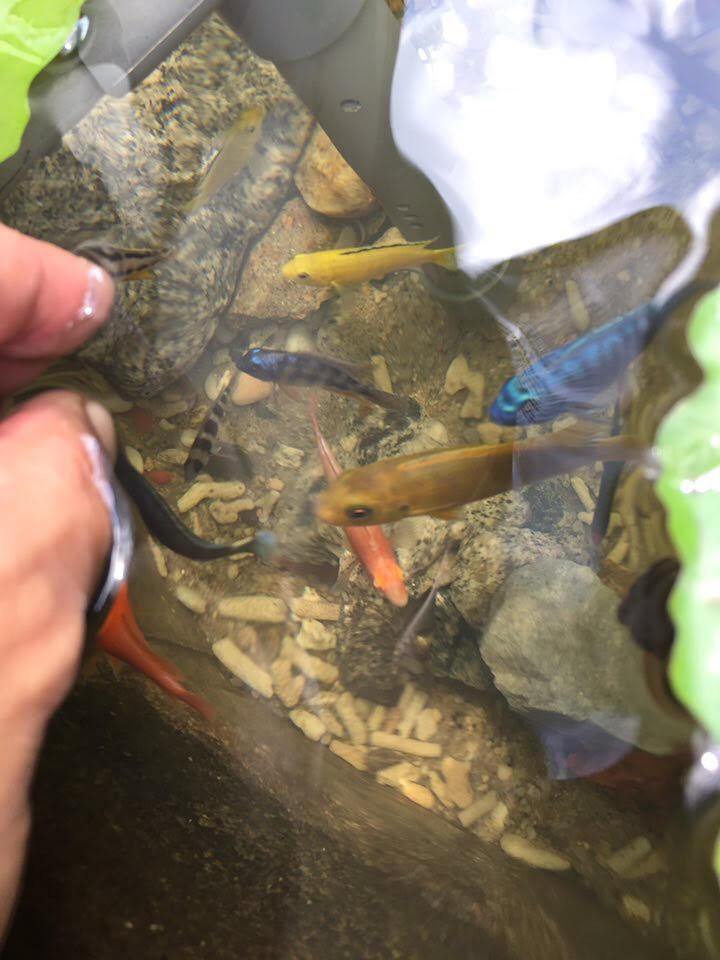 kolam ikan, peminat ikan hiasan, kolam diy