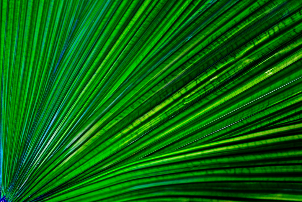 Aus dem Fotoarchiv (22) - Grün