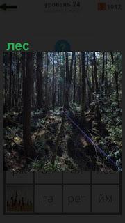 1100 слов трудно проходимый густой лес 24 уровень