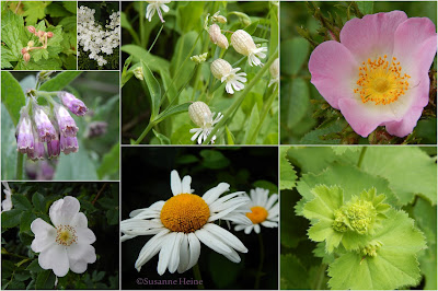 Blüten im Maigarten