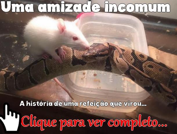 http://humordido.net/index.php/2015/10/05/amizade-incomum-entre-cobra-e-rato/