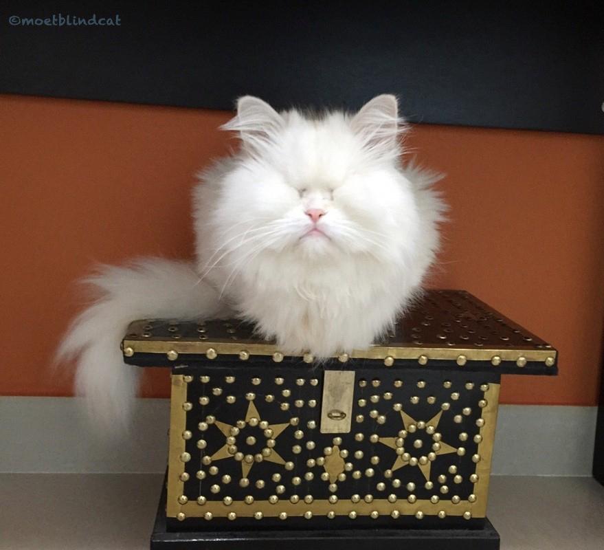 Adopting Moet the blind cat