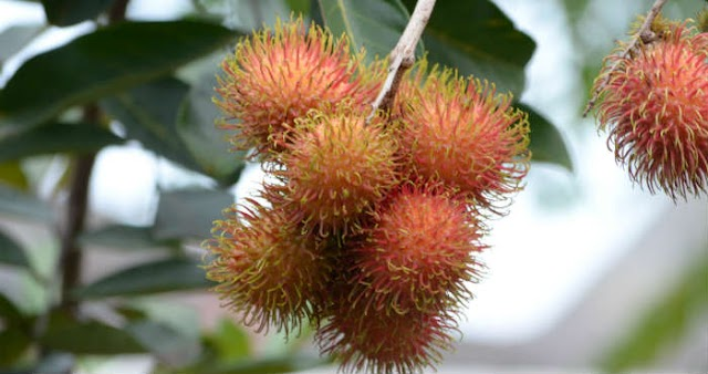 The Benefits of Rambutan for Health and Beauty