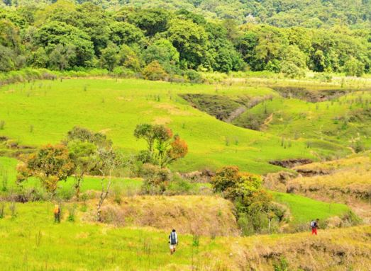 Persebaran Flora di Indonesia Lengkap