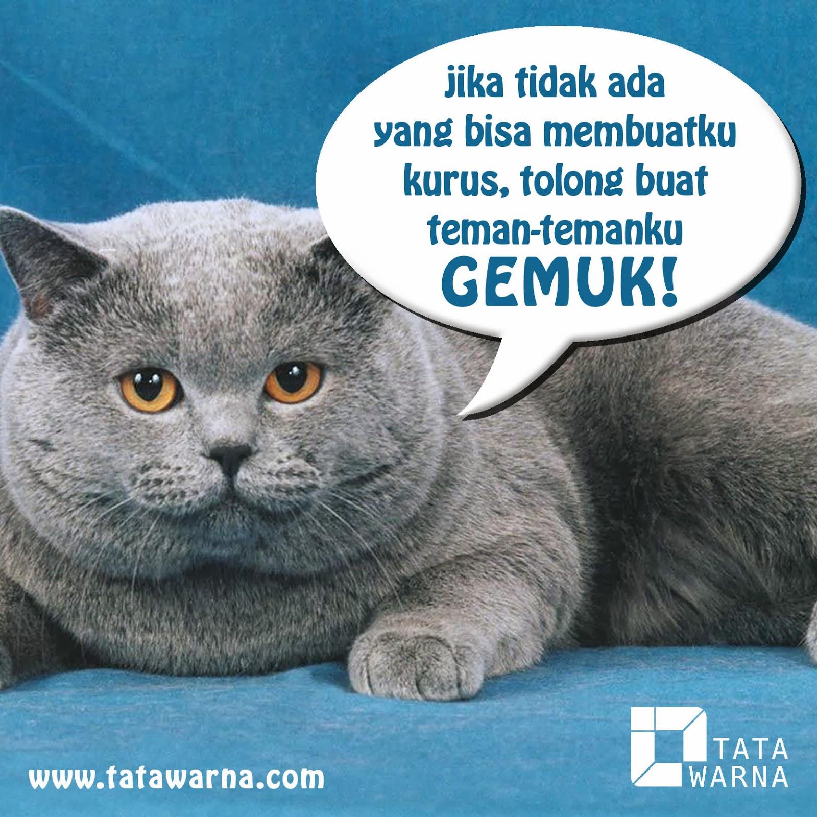 Hewan Lucu N Unik Gambar Kucing Lucu Bikin Ngekek