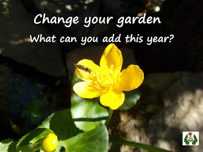 Marsh marigold caltha palustris Change your garden - what can you add this year? Green Fingered Blog