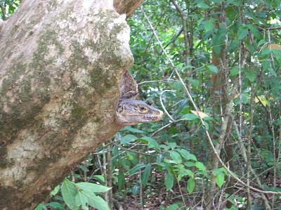 Varado Parque Nacional Manuel Antonio,Costa Rica, vuelta al mundo, round the world, La vuelta al mundo de Asun y Ricardo, mundoporlibre.com