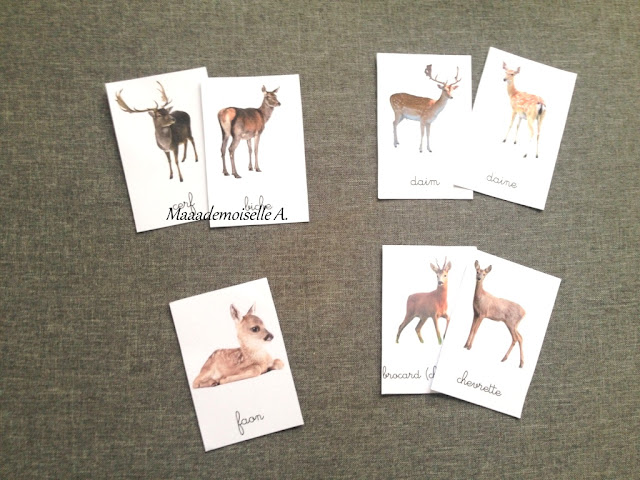 || Cartes de nomenclature à télécharger gratuitement ; Les animaux de la forêt