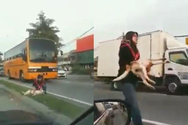(VIDEO) Wanita Menyelamatkan Anjing Cedera Cetus Perhatian Netizen