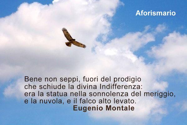 Aforismario Aforismi Frasi E Proverbi Sul Falco