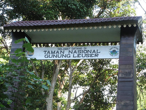 Leuser Mount National Park Attraction Enchantment At Aceh