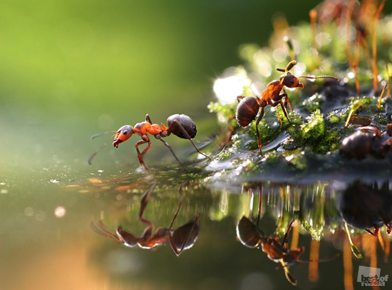ant macro photography wallpaper - photo #15