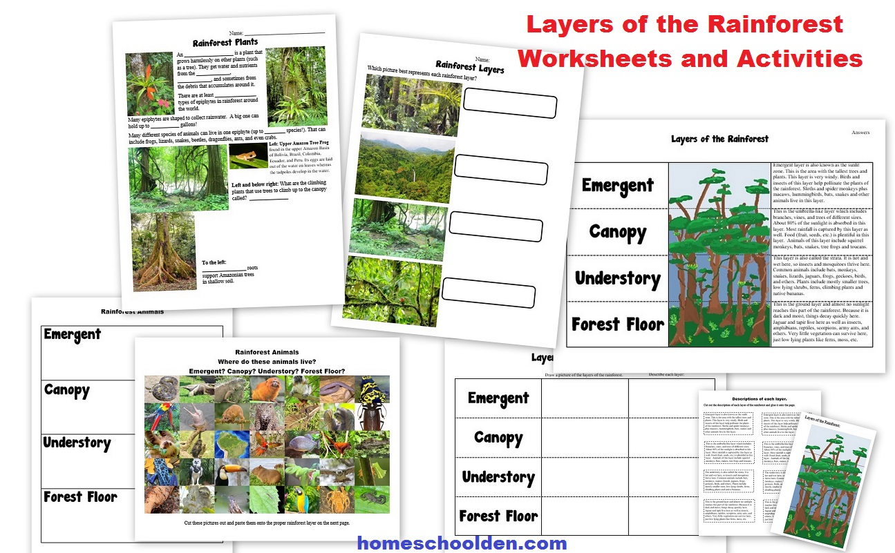 Worksheets Layers Of The Rainforest Worksheet worksheet rainforest layers fun the homeschool den rain forest plants activity our amazon unit is