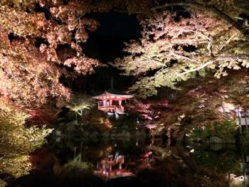 醍醐寺 秋期夜間拝観