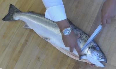 resep ikan resto
