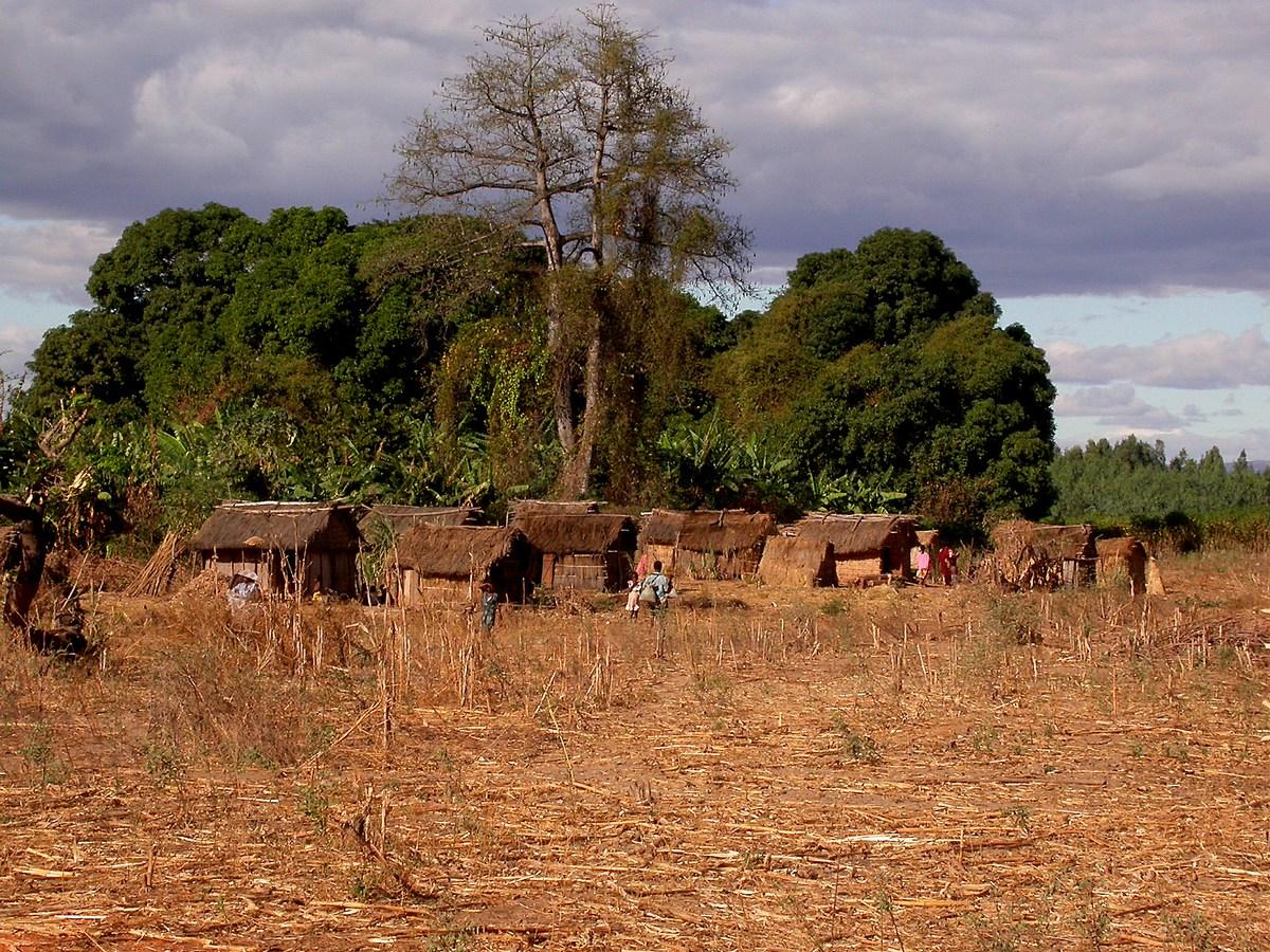 village en terre et torchis, avec les toits constitués grâce aux larges feuilles des Ravenala