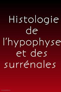 module endocrine Histologie de l'hypophyse et des surrénales