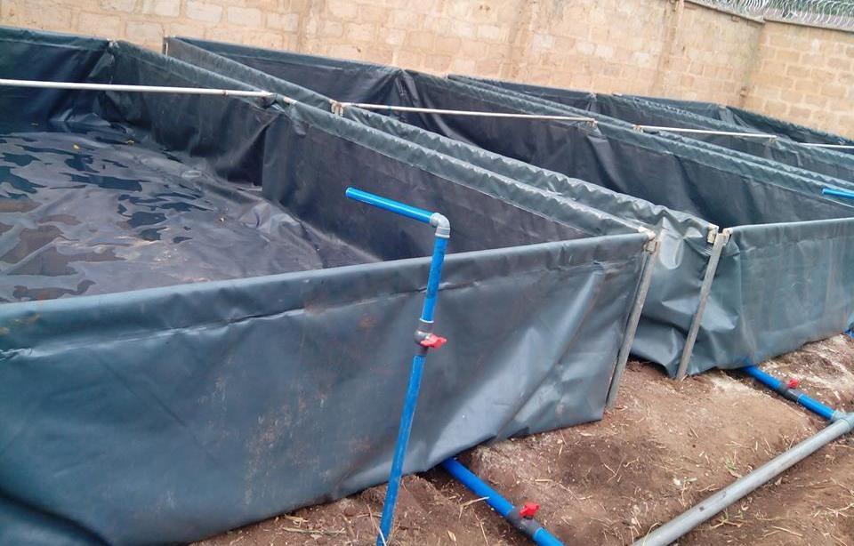 Naija women health for Tarpaulin fish pond