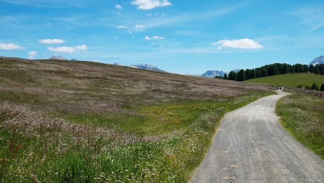 Sentiero tra i fiori sull'Alpe di Siusi