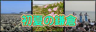 初夏の鎌倉