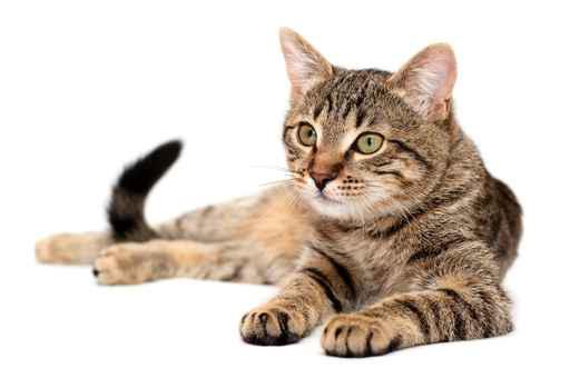 Mačka Panvet veterinarska ambulanta Subotica