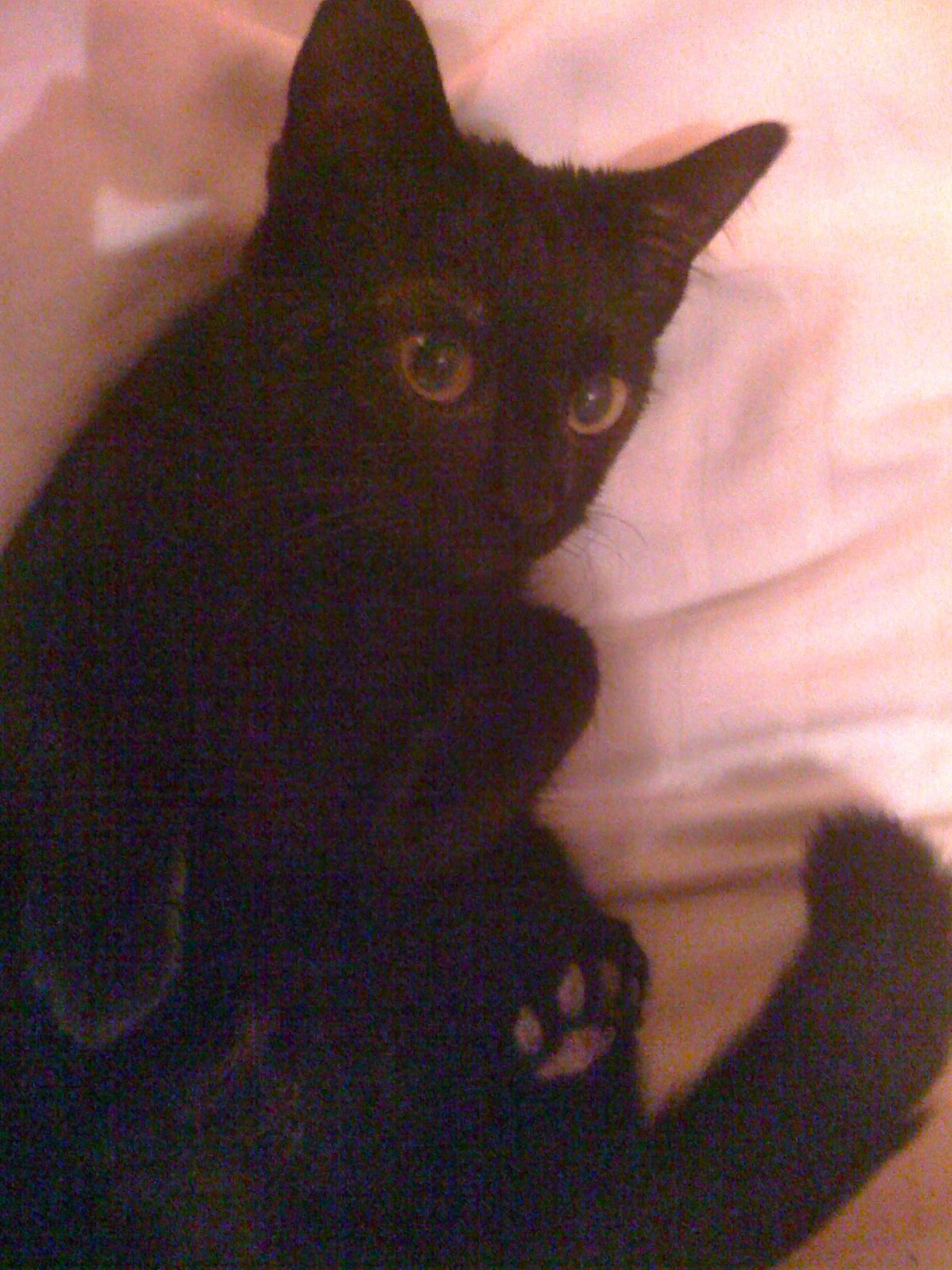 vieux noir chatte films