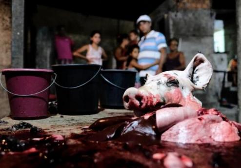 Em Santana do Ipanema, FPI interdita abatedouro clandestino