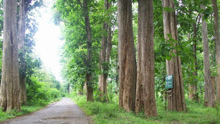 #Mengenal dan memilih jenis-jenis kayu terbaik untuk Kusen Rumah.