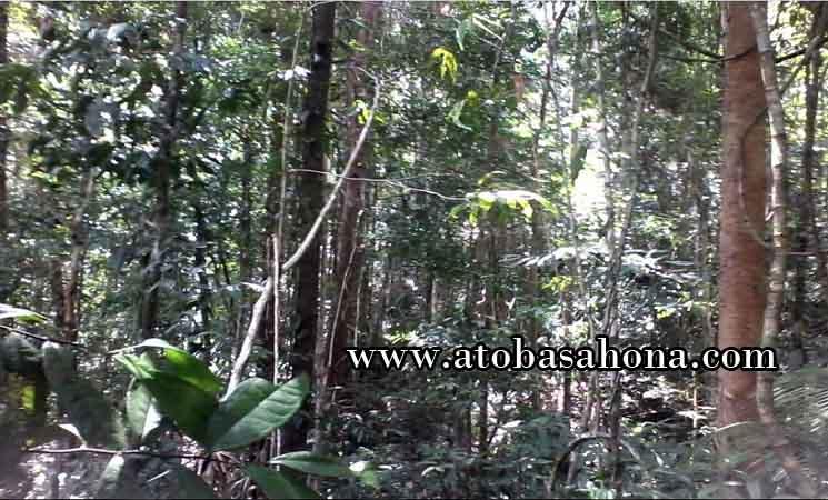 Formasi Ekosistem Hutan