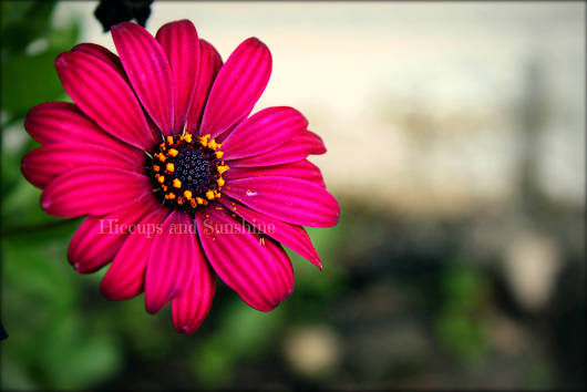 My Photographs Taken with a Canon: Flowers