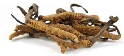 For the purpose of anti tumoral support, Cordyceps combines with other fungi which also has strong immune modulatory properties, and that is Ganoderma Lucidum.