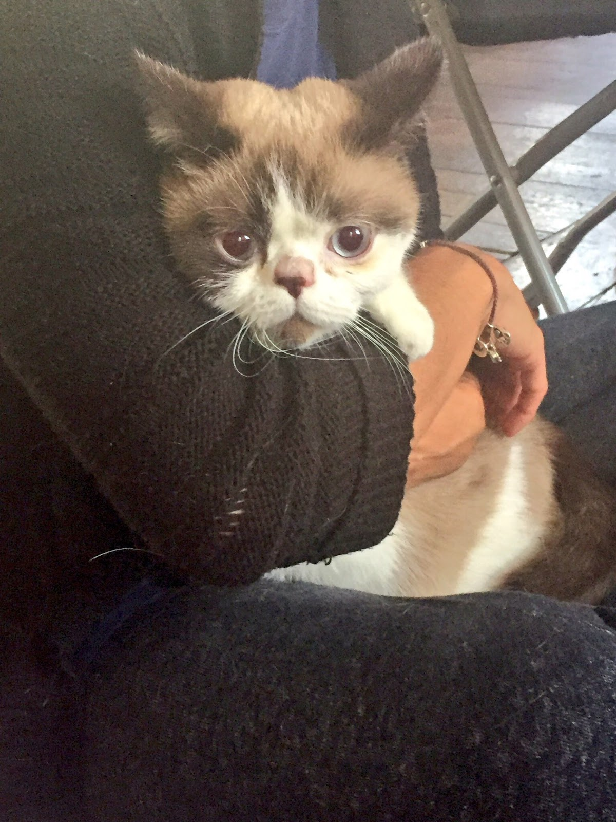 Cat Defender: Paucho Somehow Made It Out of Grenfell Tower Alive but