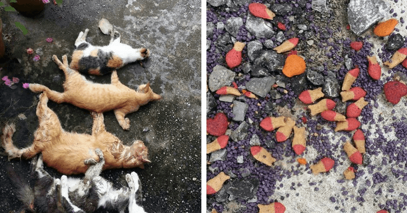 Kejam 5 Ekor Kucing Mati Serentak Termakan Makanan
