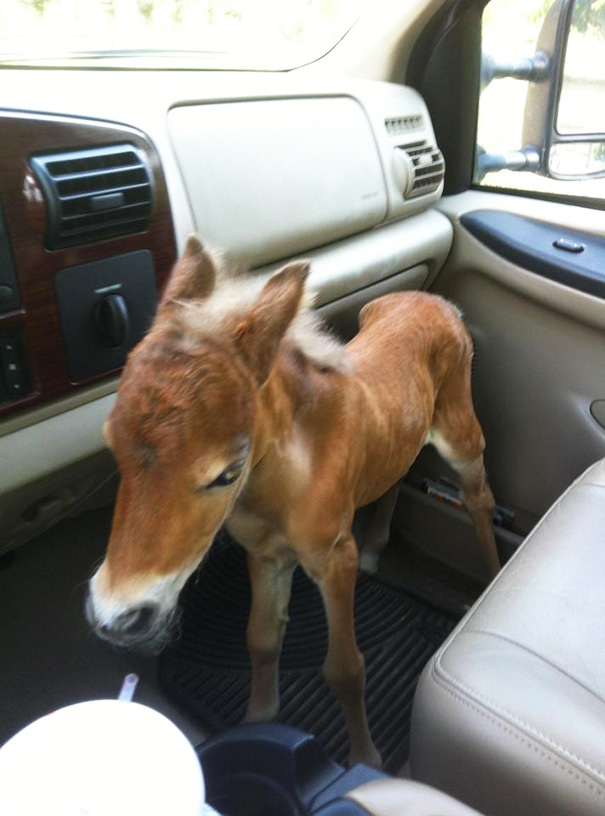 My Vet Friend Rescued an Abandoned Baby Mini Horse