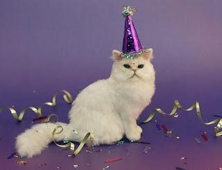 happy birthday angry cat meme