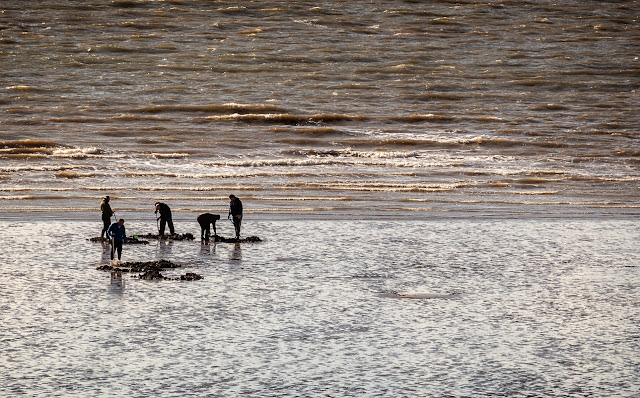 Photo of fishermen digging for lugworm on the beach at Maryport