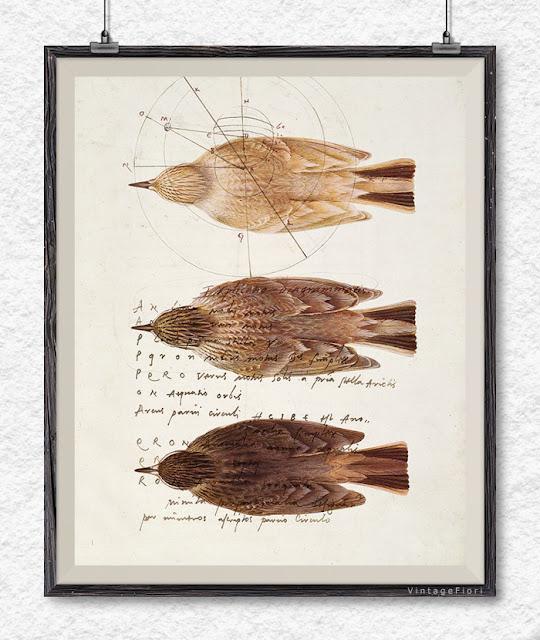 vintage bird print bird poster - Etsy