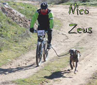 Nico - Zeus