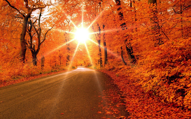 Herfstbladeren langs de kant van de weg
