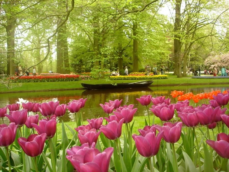 Amazing Magazine: The worlds largest flower garden ...