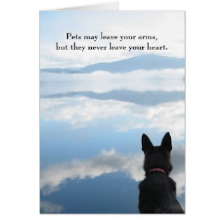 dog sympathy cards, poems \u0026 quotespets may leave your arms